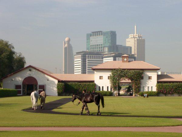 конюшня шейха в Дубай